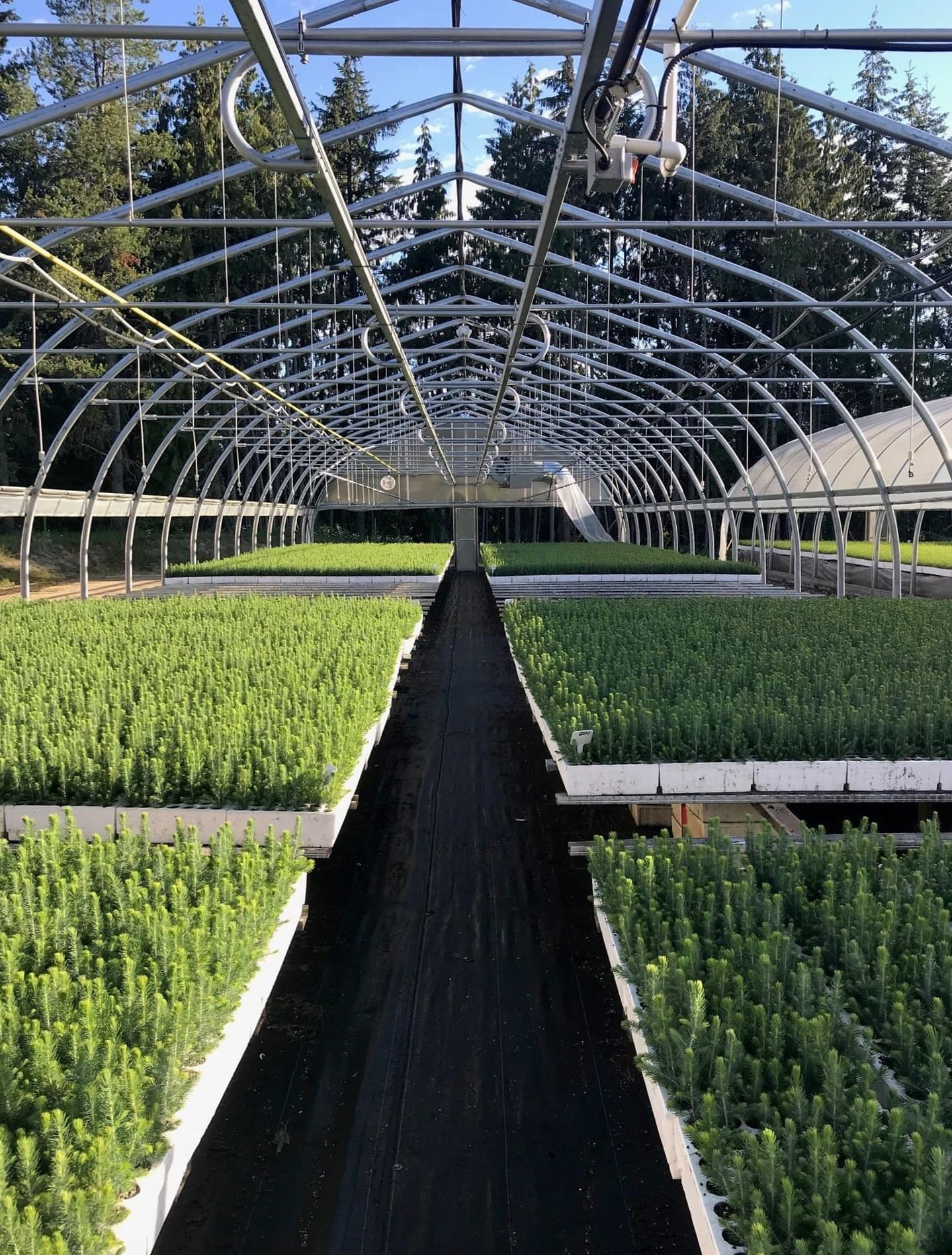 Image of Mt. Ida Nursery forestry trees greenhouse.